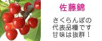 品種ランキングトップの佐藤錦