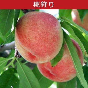 山梨の桃狩りのイメージ